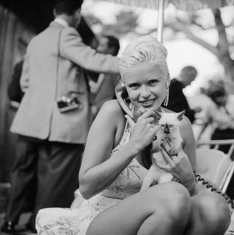 Jay Mansfield celebrity and cat
