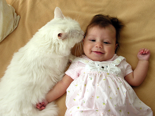 cute white kitten kissing baby cat pic