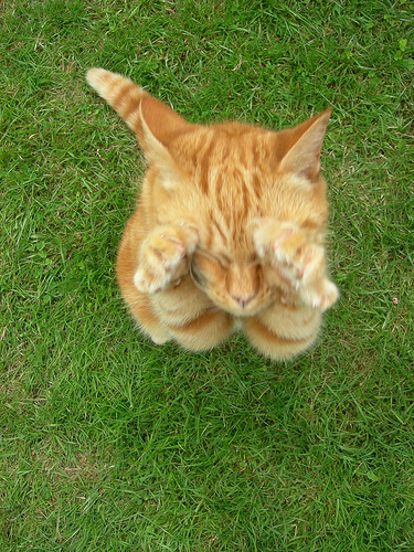 cute orange kitten jumping funny silly cat pic
