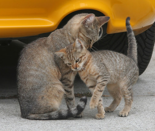 cute stray cat mother and daughter tender moment pic