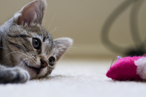 cute kitten and toy cat pic