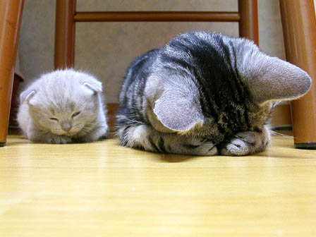 cute kitten sleeping napping cat pic