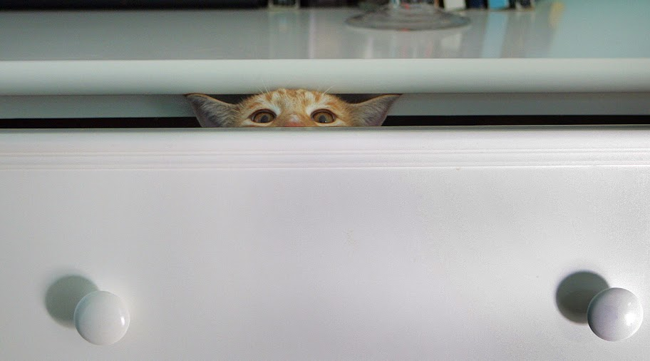 cute city the kitty funny cat hiding in dresser drawer