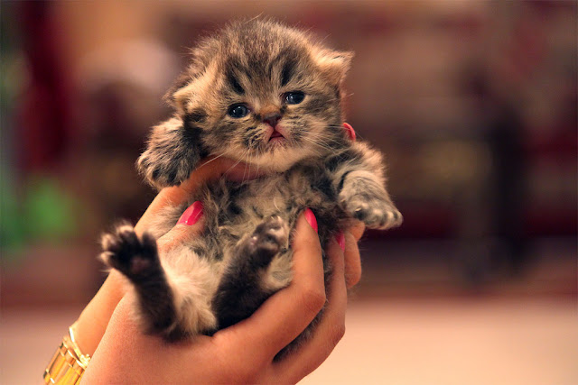 cute kitten held in hands