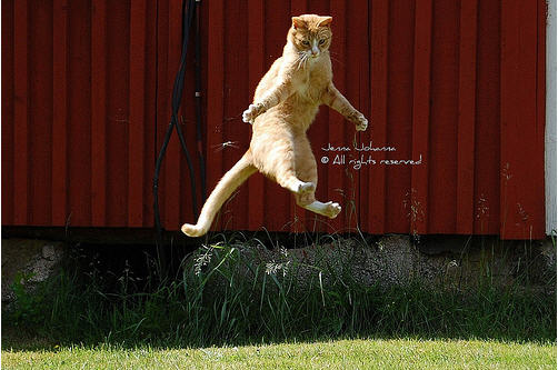cute ginger cat jumping high
