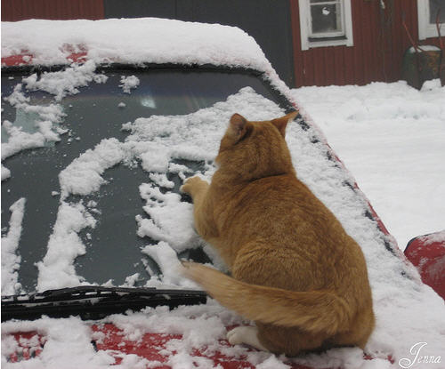 cute ginger cat wiping car windshield