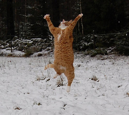 cute ginger cat catching snowflakes