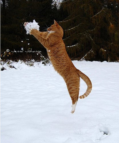 cute ginger cat catches snowball snow