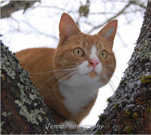 cute ginger cat sitting in the tree looking