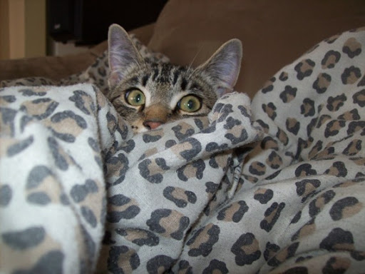 cute kitten hiding behind cover