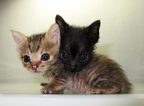 cute rescued kittens snuggling together