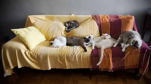 cute cat family sleeping on couch