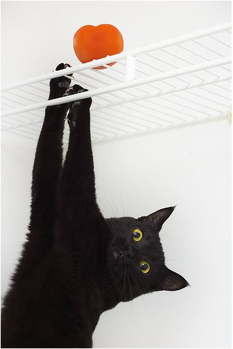 cute black cat hanging off the rack