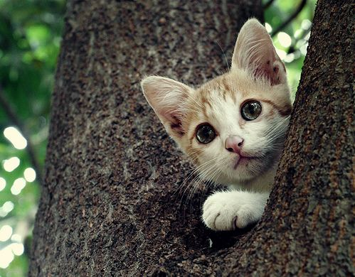 cute rescued kitten in the tree