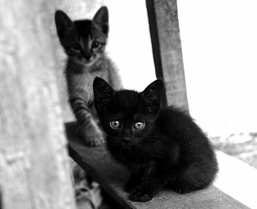 cute black kitten and tabby kitten rescued cats