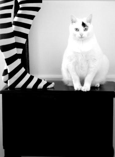 cute cat and striped socks