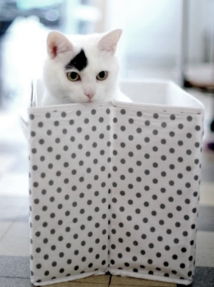 cute white cat in a hamper catouflage