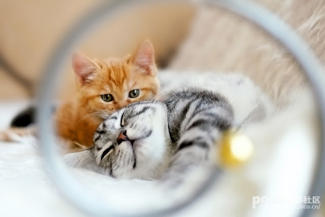 cute ginger kitten and tabby  cat