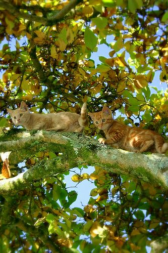 cute cats playing in the tree