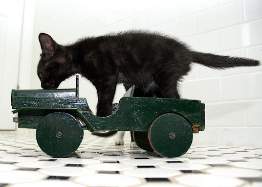 cute kitten playing on a toy car