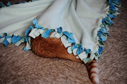 cute ginger kitty hiding under blanket
