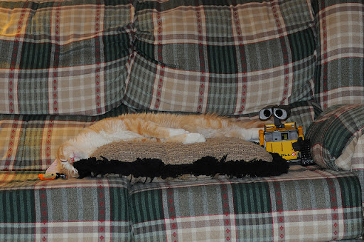 cute ginger cat sleeping wall-e watching