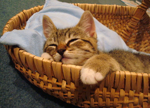 cute tabby kitten napping in basket