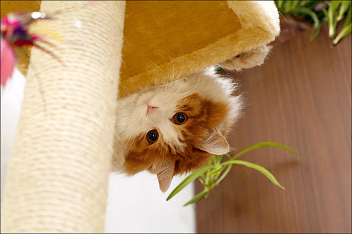 cute cat looking down the cat tree