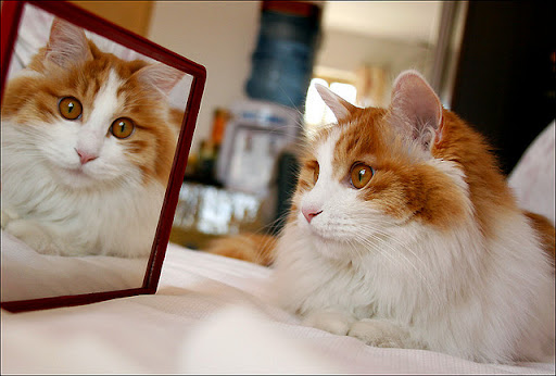 cute cat seeing himself in mirror