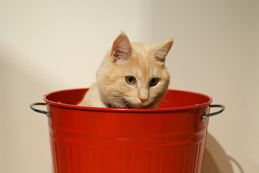 cute ginger cat sitting in bucket