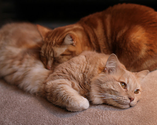 cute ginger cats