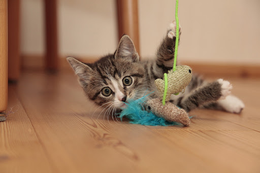 cute tabby kitten playing with cat toy