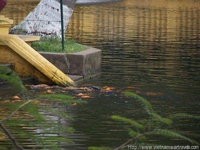 Ho Chi Minh Stilt House Gardens & Fishpond (7)