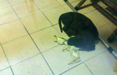 [Dog]下班途中…撿了小黑狗回家…