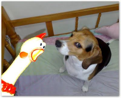 [Dog]紅豆大戰雞型玩具!