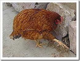 pollo karate