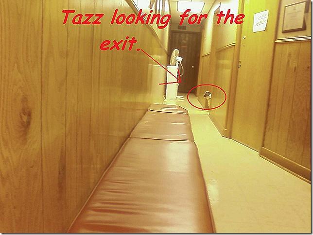 tazz lookin