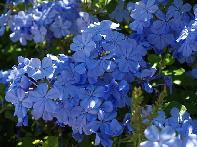 flores de jardim fotos e nomes:Imagens com Texto: Ainda os nomes (das plantas)