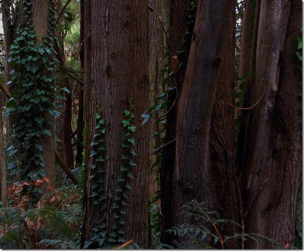 Simpson bush
