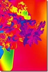 Mitty's flowers 8