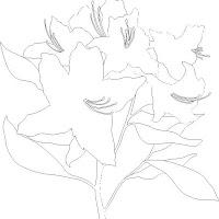 azalea1.jpg