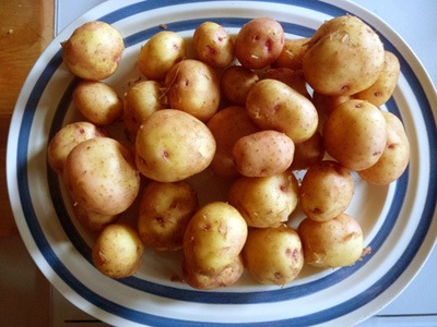 New potatoes b