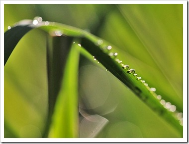 101022_rain_lemongrass_abstract