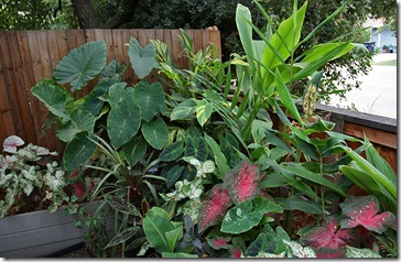 frontyard_tropical_bed