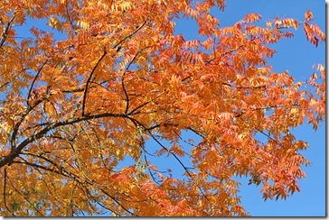 101114_fall_color