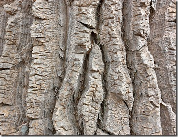 bark_tree_aloe