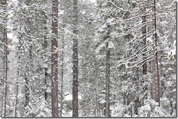 101127_mt_shasta_new_snow_04