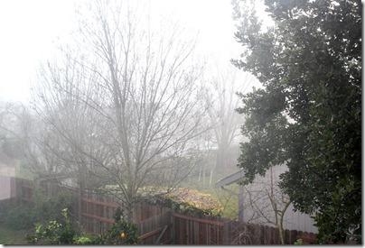 110125_fog