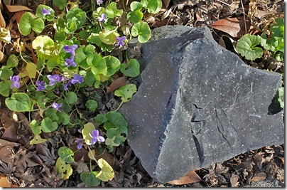 110123_violets