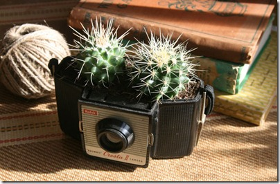 cactus_cam2